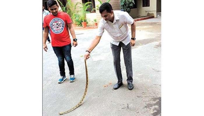 viral video: കോണ്ഗ്രസ് നേതാവിന്റെ പാമ്പ് പിടുത്തം വന് ഹിറ്റ്