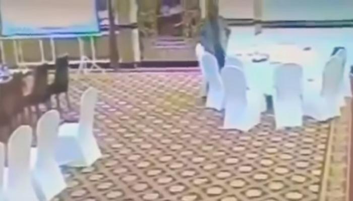 video: പേഴ്സ് അടിച്ചു മാറ്റുന്നതിലും പാക് മുന്നില്